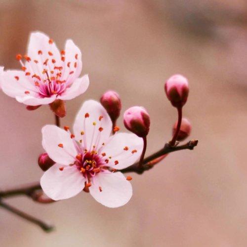 Blossom Massage